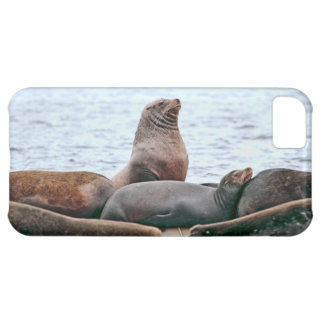 Sea Lions Photo Cover For iPhone 5C