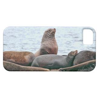 Sea Lions Photo iPhone 5 Cases