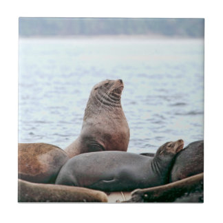 Sea Lions Photo Ceramic Tiles