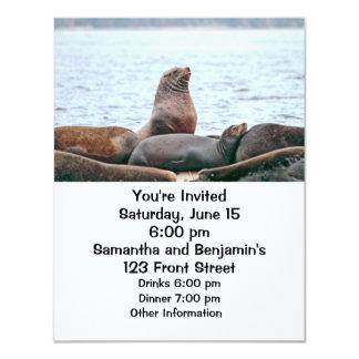 "Sea Lions Photo 4.25"" X 5.5"" Invitation Card"