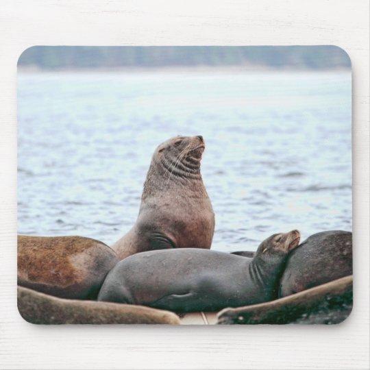 Sea Lions Photo Mouse Pad