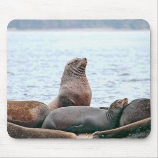 Sea Lions Photo Mousepad