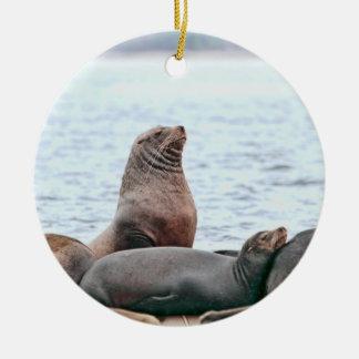 Sea Lions Photo Christmas Ornaments