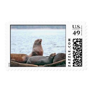 Sea Lions Photo Postage Stamp