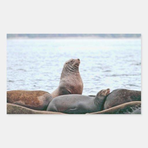 Sea Lions Photo Rectangular Sticker