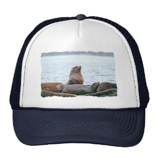 Sea Lions Photo Trucker Hat