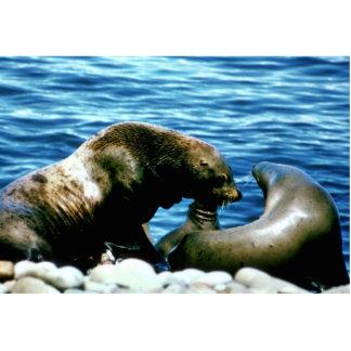 Sea Lions Photo Sculpture