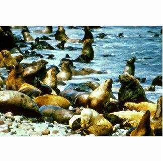Sea Lions Photo Cut Out