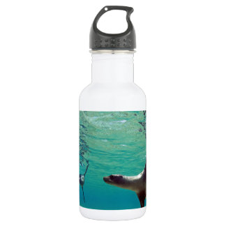 Sea lions playing underwater Galapagos Islands Water Bottle