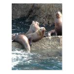 Sea Lions Post Card