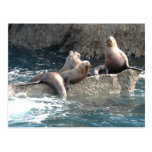 Sea Lions Post Cards