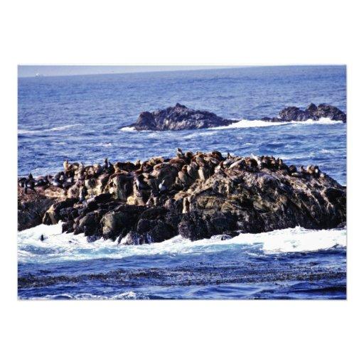 Sea Lions - Pt. Lobos State Preserve Custom Announcements