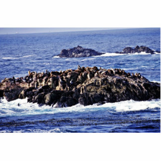 Sea Lions - Pt. Lobos State Preserve Photo Cut Outs