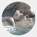 Sea Lions Round Stickers