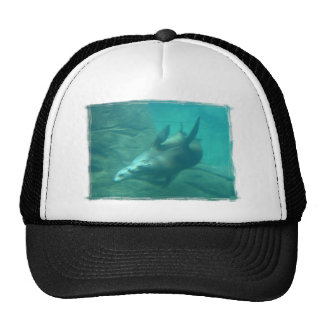 Sea Lions Scrape Edge Hat