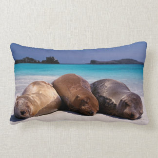 Sea Lions Sleeping On Beach | Ecuador Lumbar Pillow
