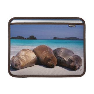 Sea Lions Sleeping On Beach | Ecuador MacBook Sleeve