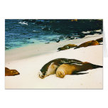 Sea Lions Spooning Greeting Card