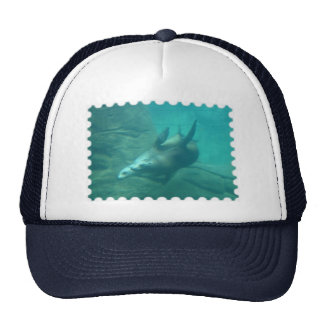 Sea Lions Stamp Hat