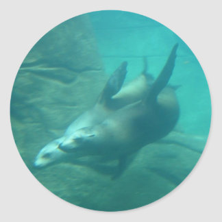 Sea Lions Stickers