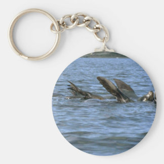 Sea Lions Swimming On Backs Keychains