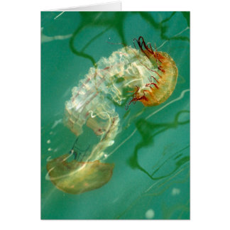 Sea Nettle Jellyfish Card