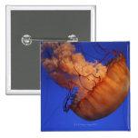 Sea nettle jellyfish pins