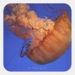 Sea nettle jellyfish square sticker