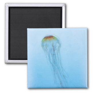 Sea Nettle Magnet