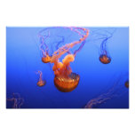Sea Nettles in motion picture Photo