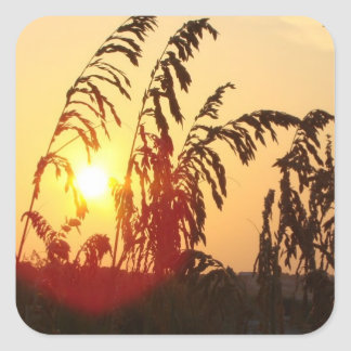 Sea Oat Sunrise Square Sticker