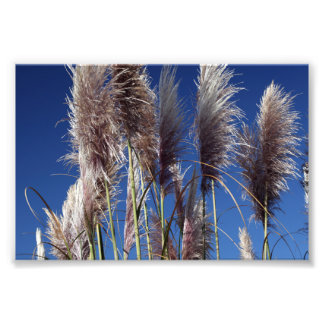 Sea Oats along PCH Photo Print