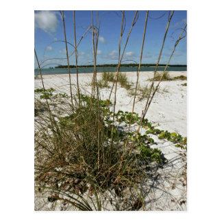 Sea oats and other beach vegetation postcard