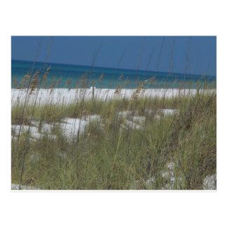 Sea Oats and Waves Postcard