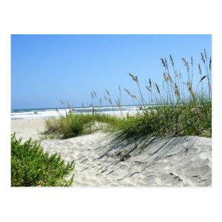 Sea Oats at Ocracoke Postcard