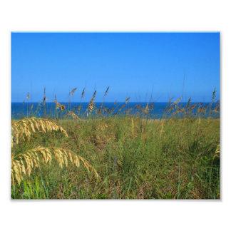 Sea oats beach dune ocean and sky photo