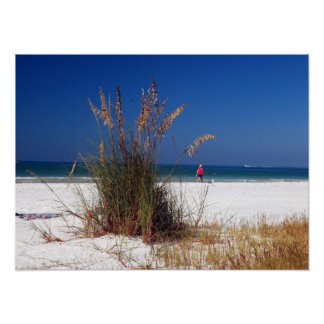 Sea Oats, Beach, Poster