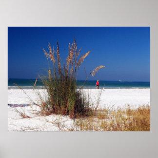 Sea Oats, Beach, Poster