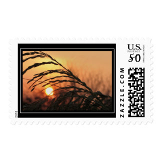 Sea Oats In Sunset Postage