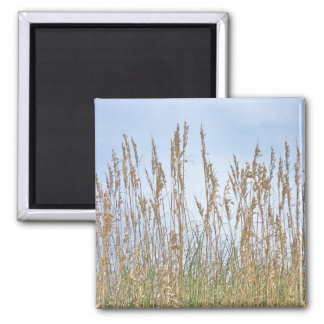 Sea Oats Outer Banks NC Series Magnet