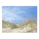 Sea Oats Outer Banks NC Series Post Cards
