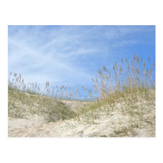 Sea Oats Outer Banks NC Series Postcard