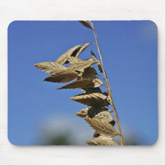 Sea oats panicle with spikelets mouse pad