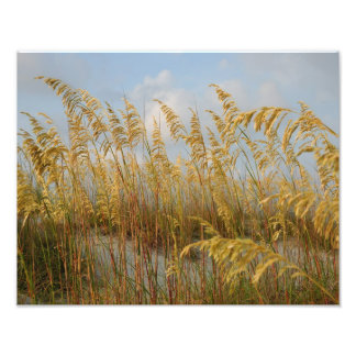 sea oats photo print