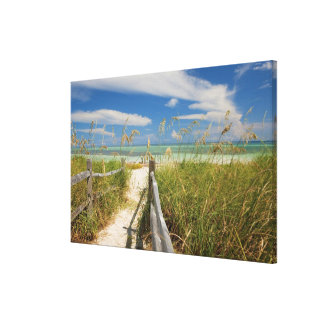 Sea oats Uniola paniculata) growing by beach, Canvas Print