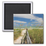 Sea oats Uniola paniculata) growing by beach, Refrigerator Magnets