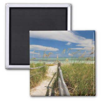 Sea oats Uniola paniculata growing by beach Refrigerator Magnets