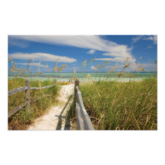 Sea oats Uniola paniculata) growing by beach, Photo Print
