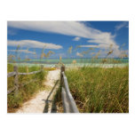 Sea oats Uniola paniculata) growing by beach, Post Card