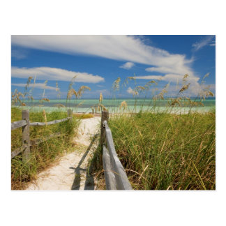 Sea oats Uniola paniculata) growing by beach, Postcard